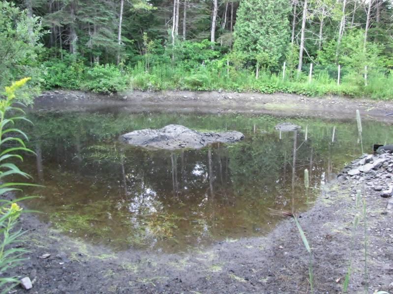 Réaménagement du lac  IMG_6827