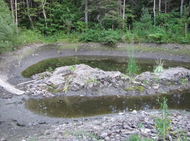 Réaménagement du lac  IMG_8618