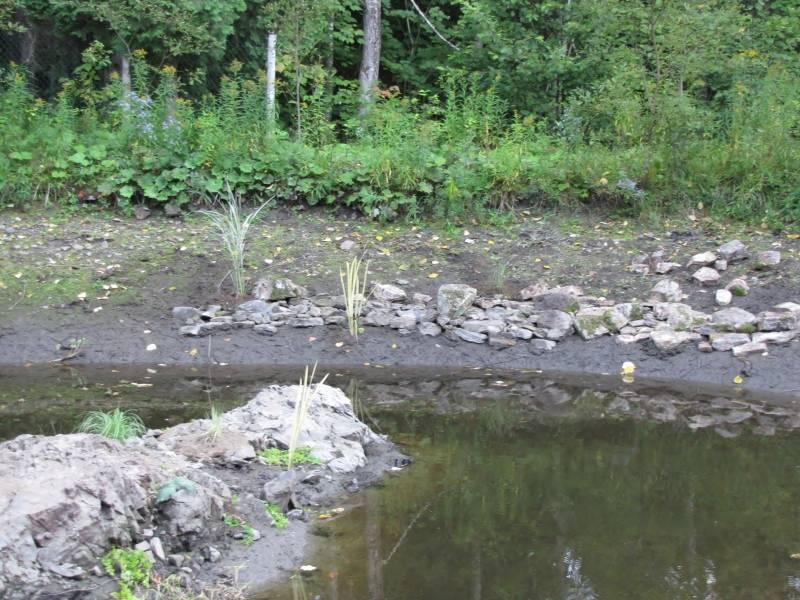 Réaménagement du lac  IMG_8721