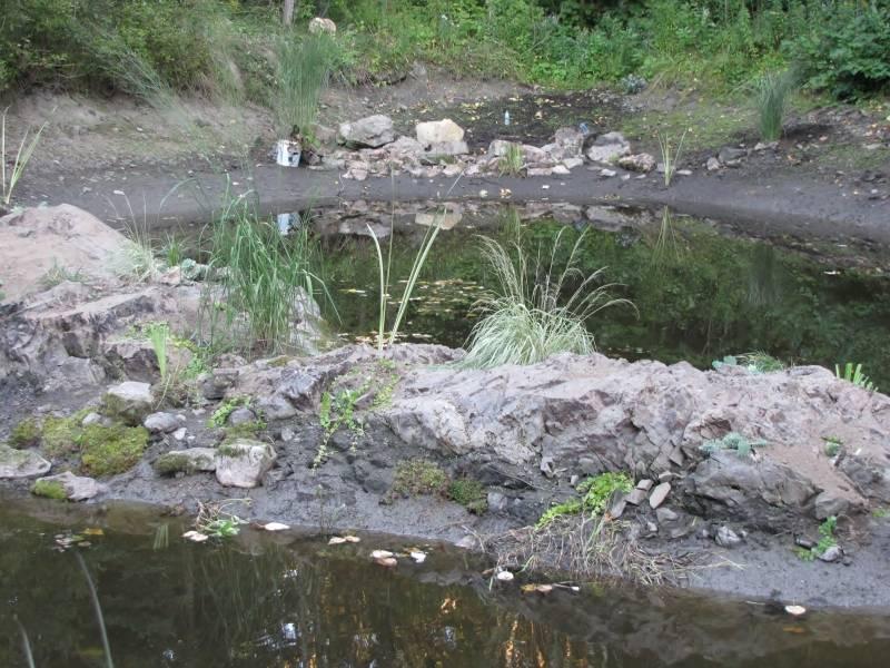 Réaménagement du lac  IMG_8722