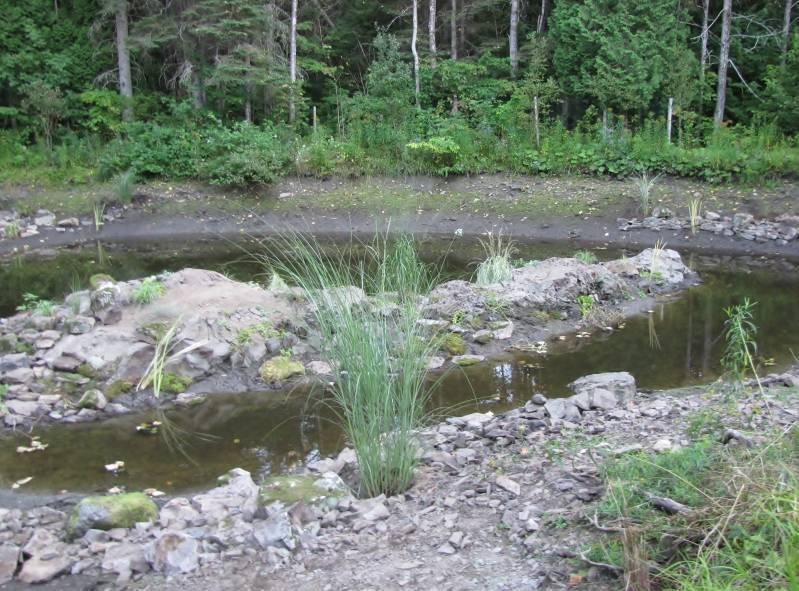 Réaménagement du lac  IMG_8726