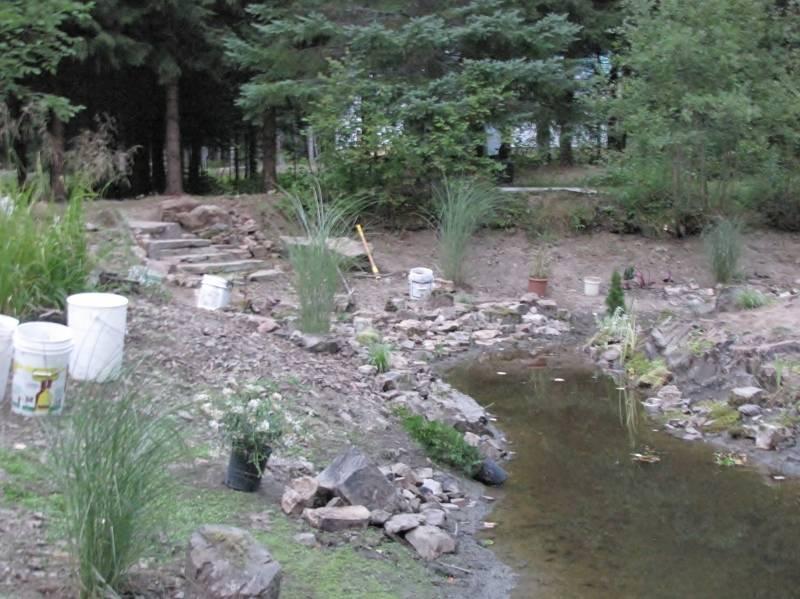 Réaménagement du lac  IMG_8768