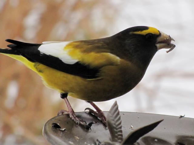 Oiseaux  2014 /2015 IMG_0021_640x480