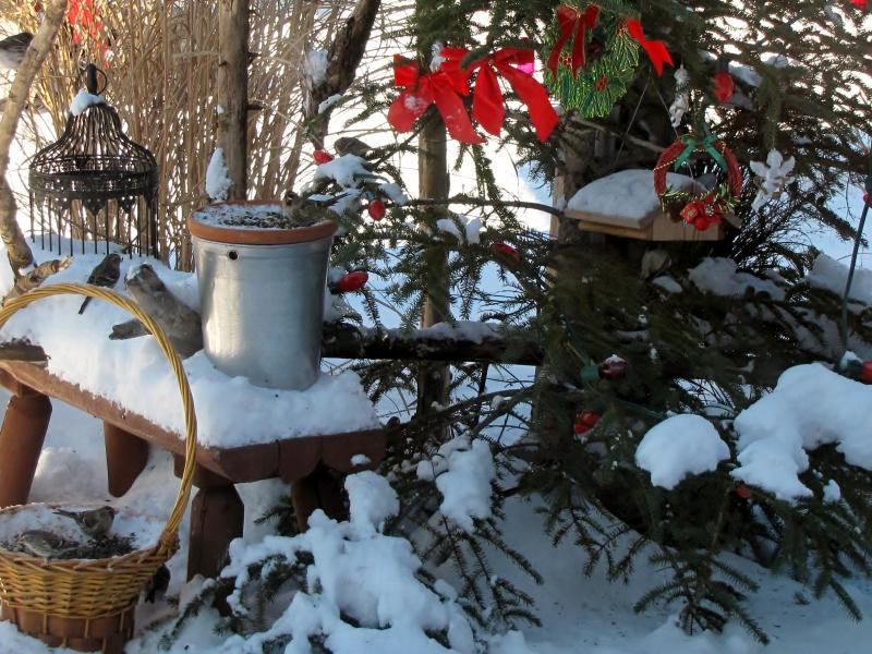 Mes oiseaux  hiver  2012 - 2013 IMG_5014