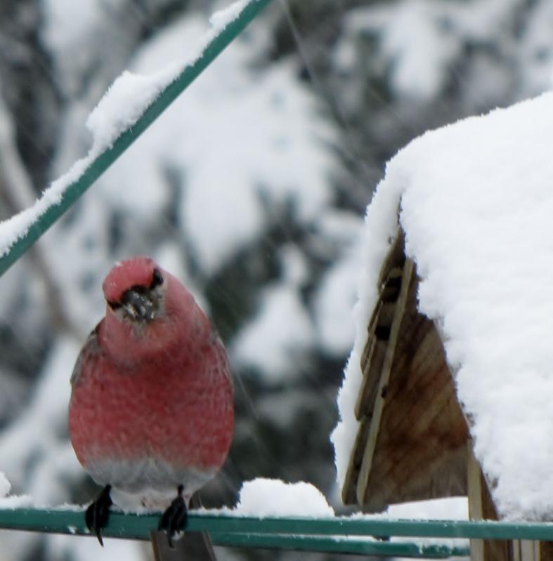 Nouveau décor pour les oiseaux IMG_7623