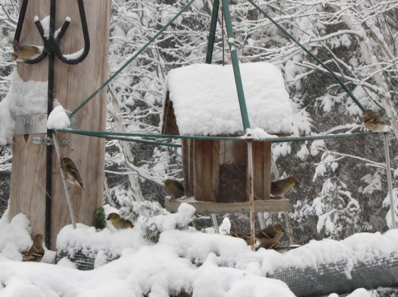 Nouveau décor pour les oiseaux IMG_7628