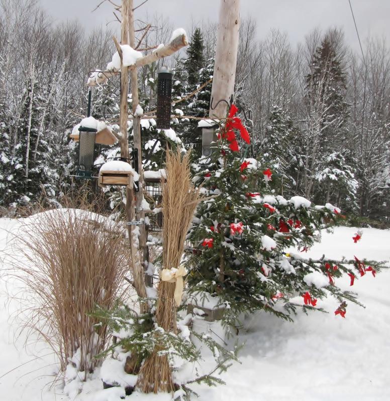 Nouveau décor pour les oiseaux IMG_7637