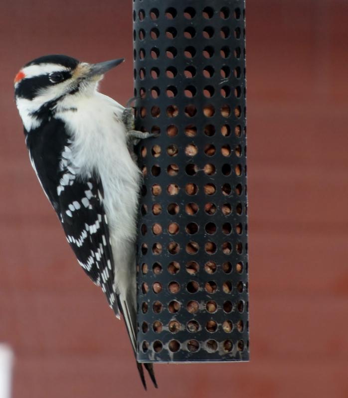 Nouveau décor pour les oiseaux IMG_7645