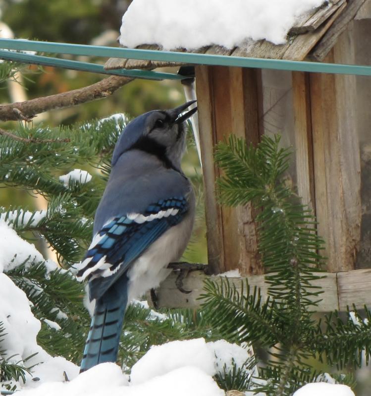 Nouveau décor pour les oiseaux IMG_7647