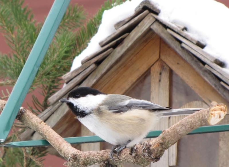Nouveau décor pour les oiseaux IMG_7669