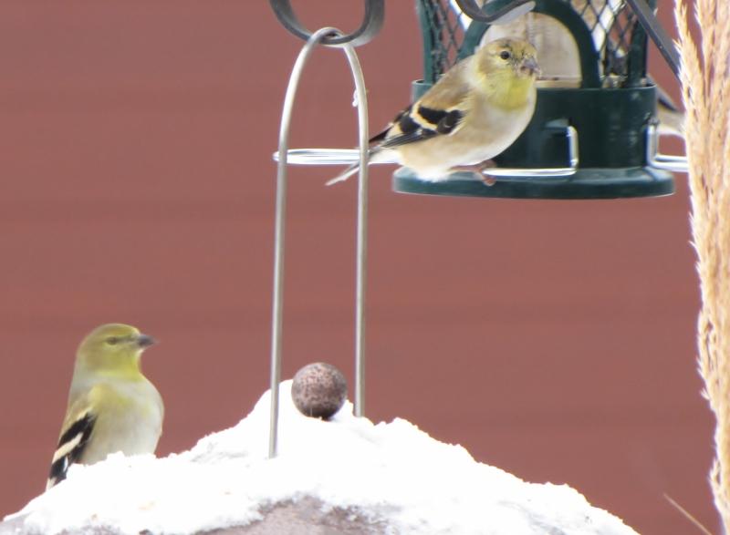 Nouveau décor pour les oiseaux IMG_7694
