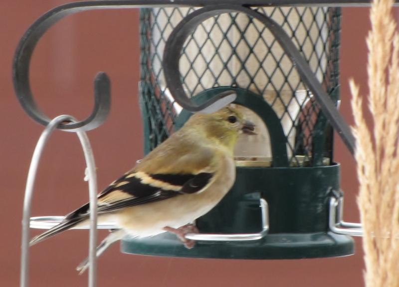 Nouveau décor pour les oiseaux IMG_7695