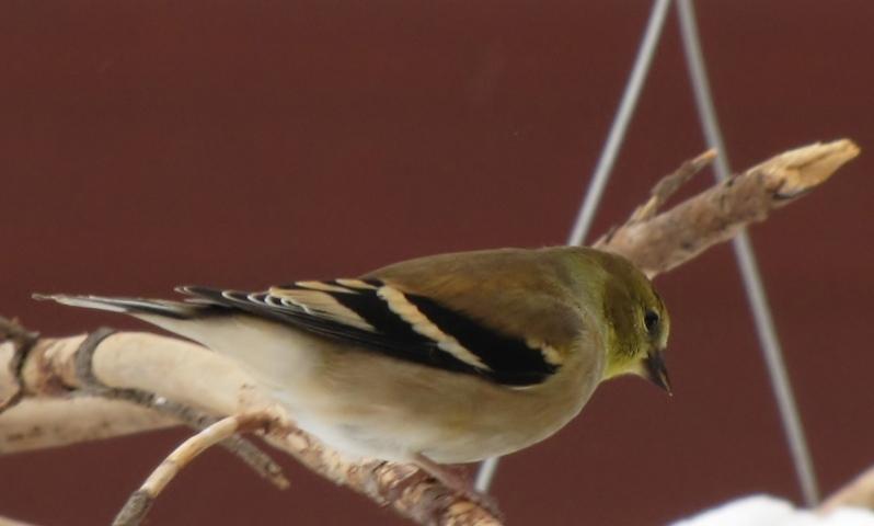 Nouveau décor pour les oiseaux IMG_7696