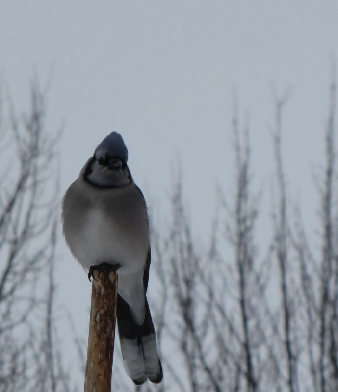 Nouveau décor pour les oiseaux IMG_8228