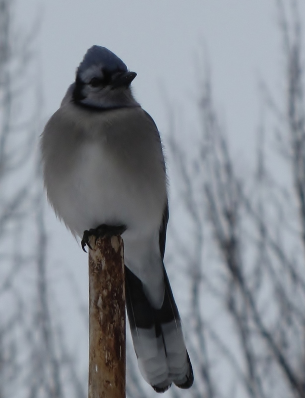 Nouveau décor pour les oiseaux IMG_8229