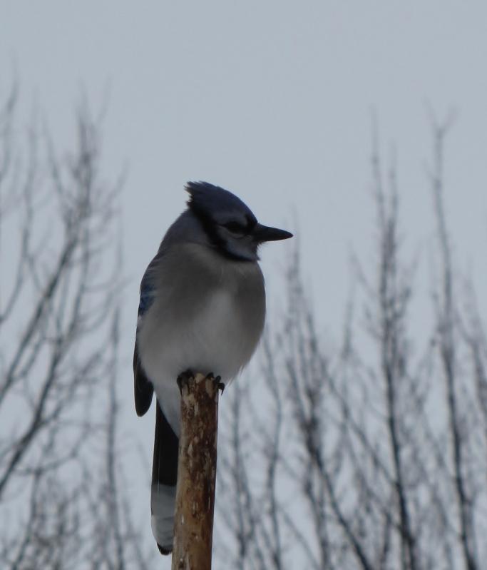 Nouveau décor pour les oiseaux IMG_8230