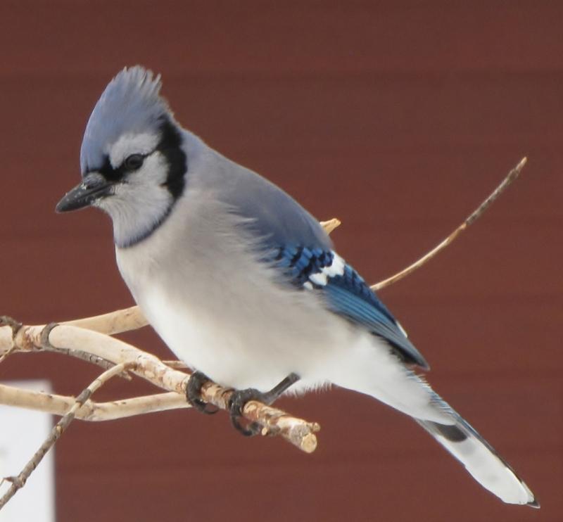 Nouveau décor pour les oiseaux IMG_8232