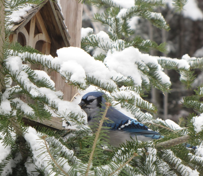 Nouveau décor pour les oiseaux IMG_8240