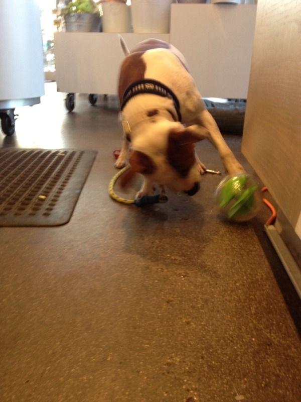Planet Dog Mazee! 63224a46