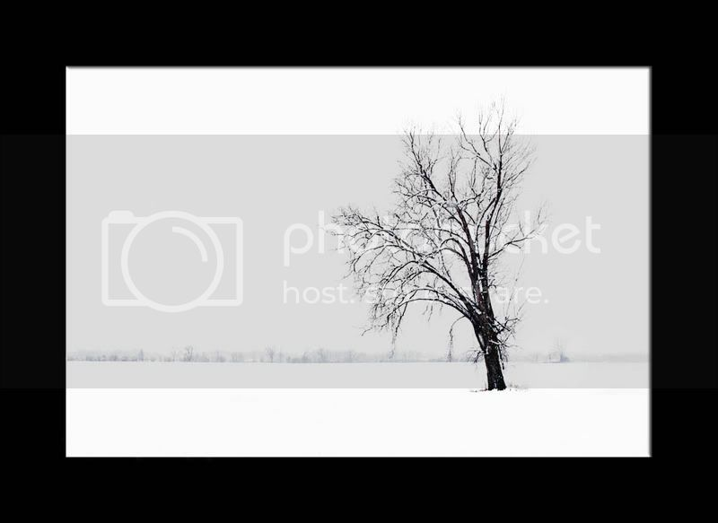 Lone Tree...REWORK POSTED LoneTree_CompWB