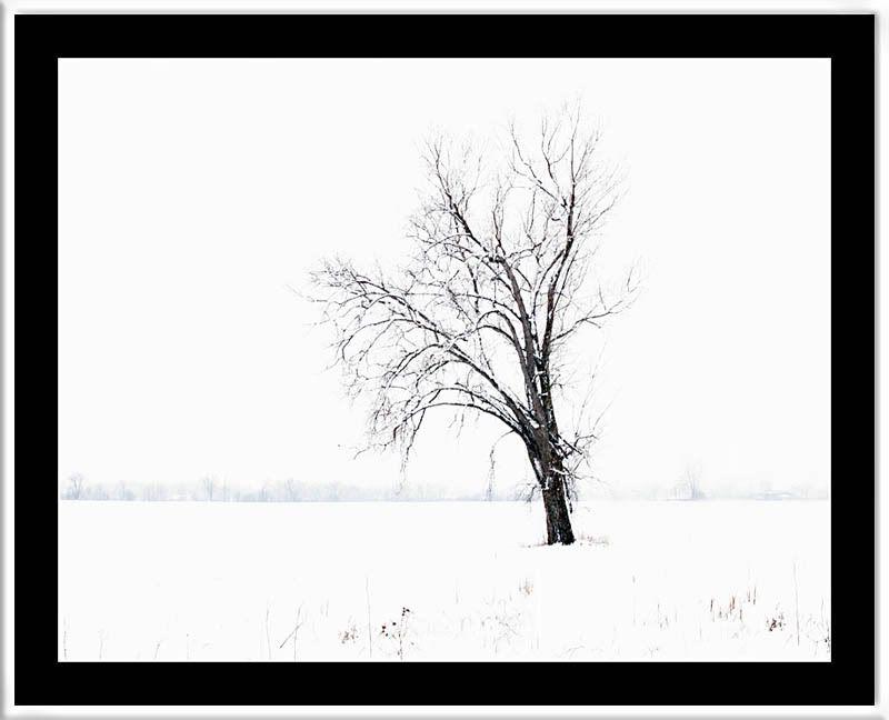 Lone Tree...REWORK POSTED LoneTree_FramedWB