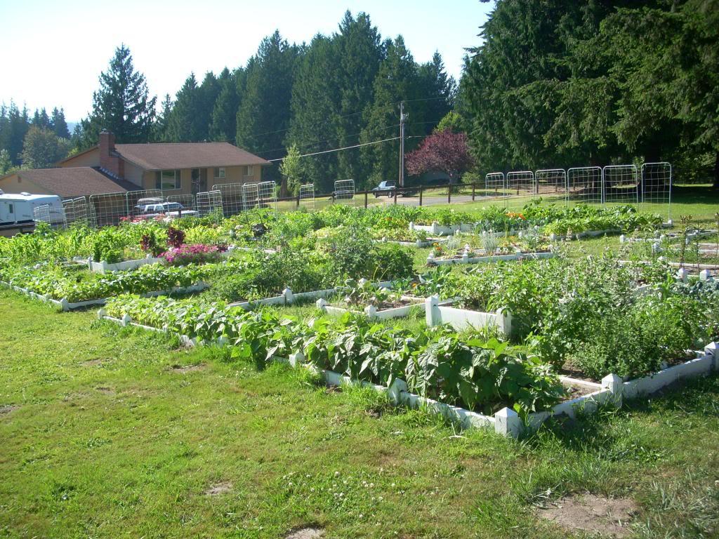 2,000 Sq. Foot Garden Need Plant Ideas - Page 2 DSCN1509_zpsc4e2b87e