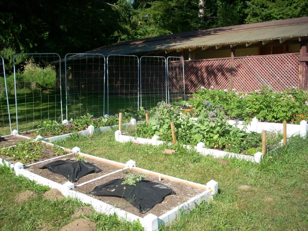 2,000 Sq. Foot Garden Need Plant Ideas - Page 2 DSCN1511_zpsb4864197