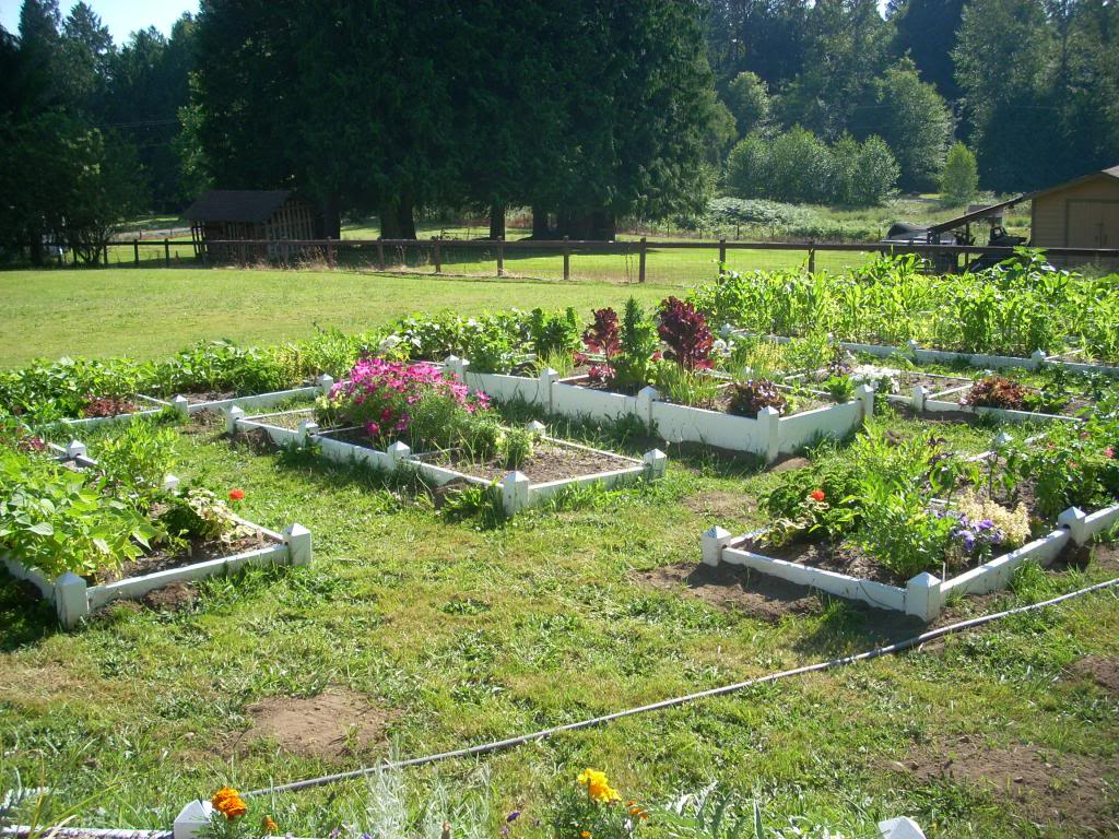 2,000 Sq. Foot Garden Need Plant Ideas - Page 2 DSCN1513_zpsfdc10f9e