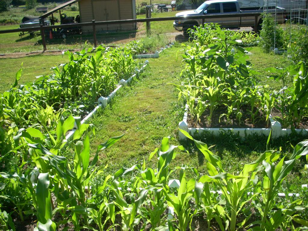 2,000 Sq. Foot Garden Need Plant Ideas - Page 2 DSCN1516_zps03bd4731