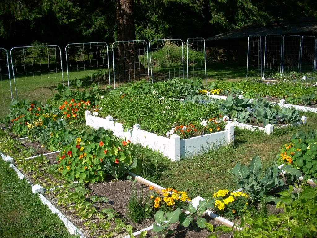 2,000 Sq. Foot Garden Need Plant Ideas - Page 2 DSCN1518_zpsc87ed309
