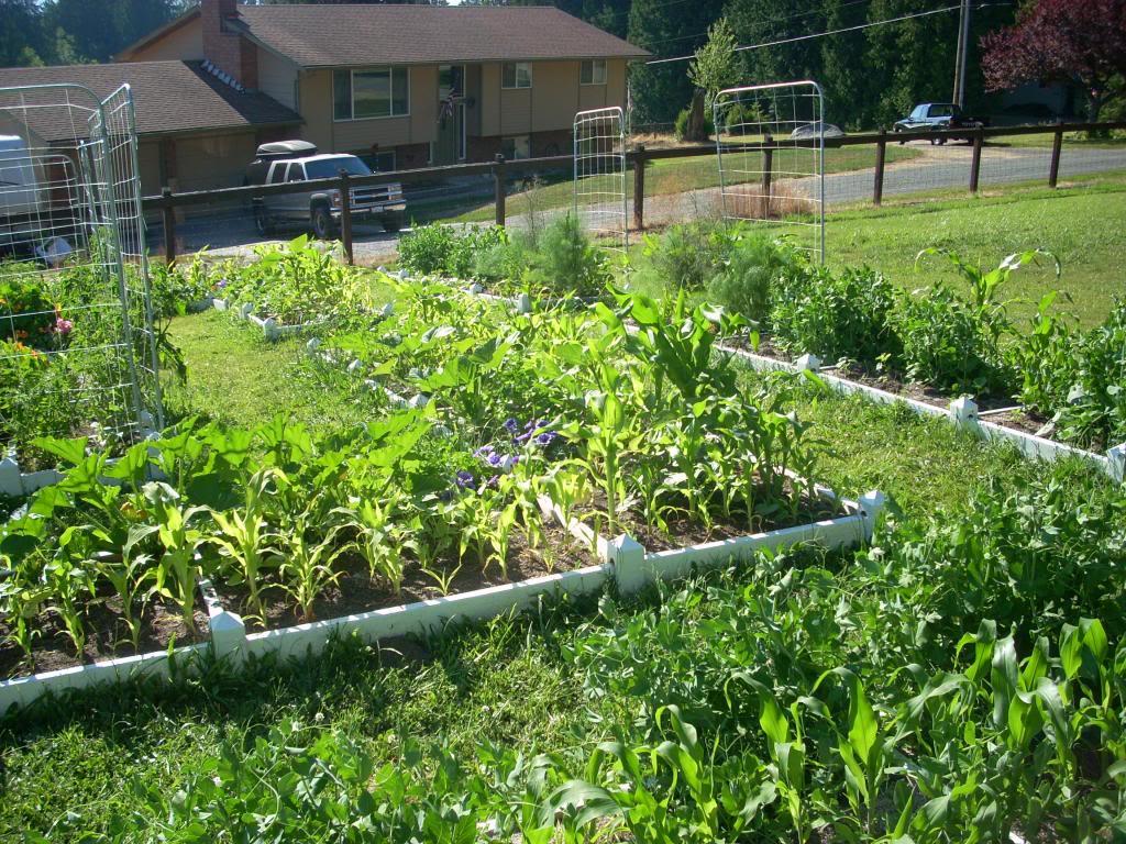 2,000 Sq. Foot Garden Need Plant Ideas - Page 2 DSCN1519_zps59e63d62