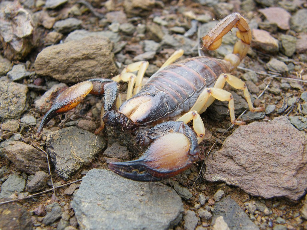 My scorpion photo collection DSCF1249_zps232e46fb