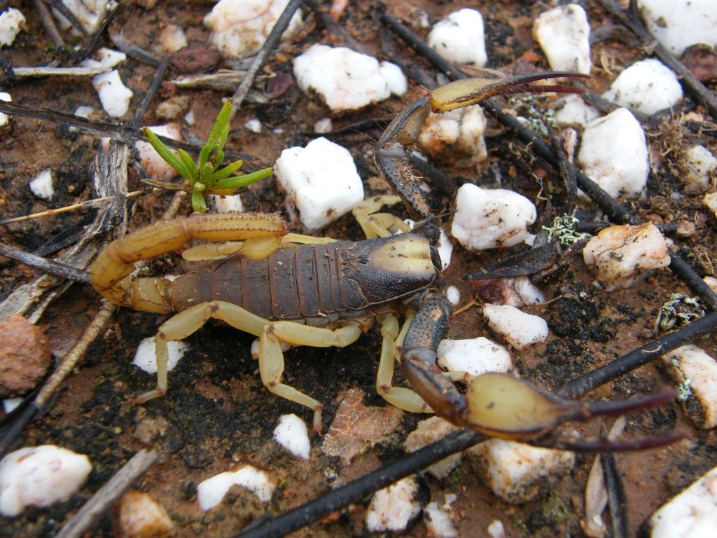 My scorpion photo collection DSCF1252_zps17d5b028