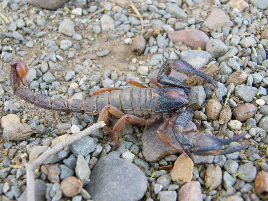 Scorpion Trip DSCF1511_zpsd23d6a62