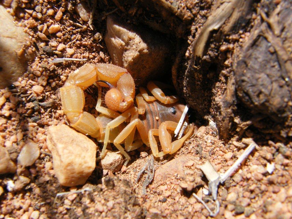 Scorpion Trip DSCF1520_zps3adc3c18