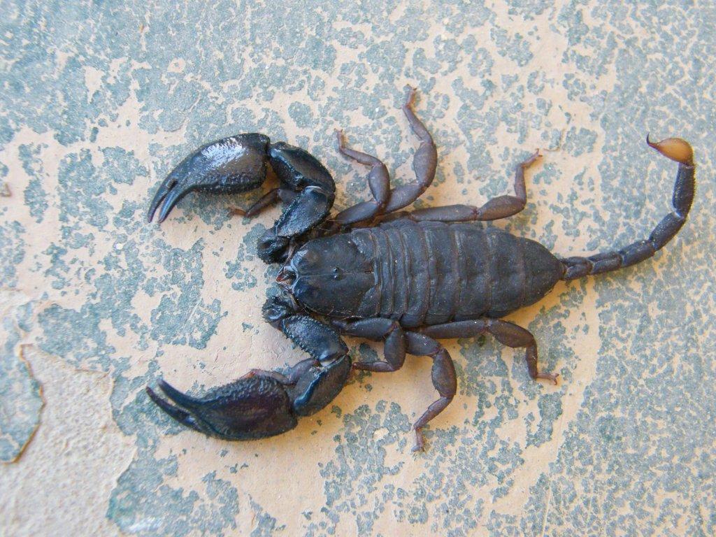 Scorpion Trip DSCF1540_zps04f404f0