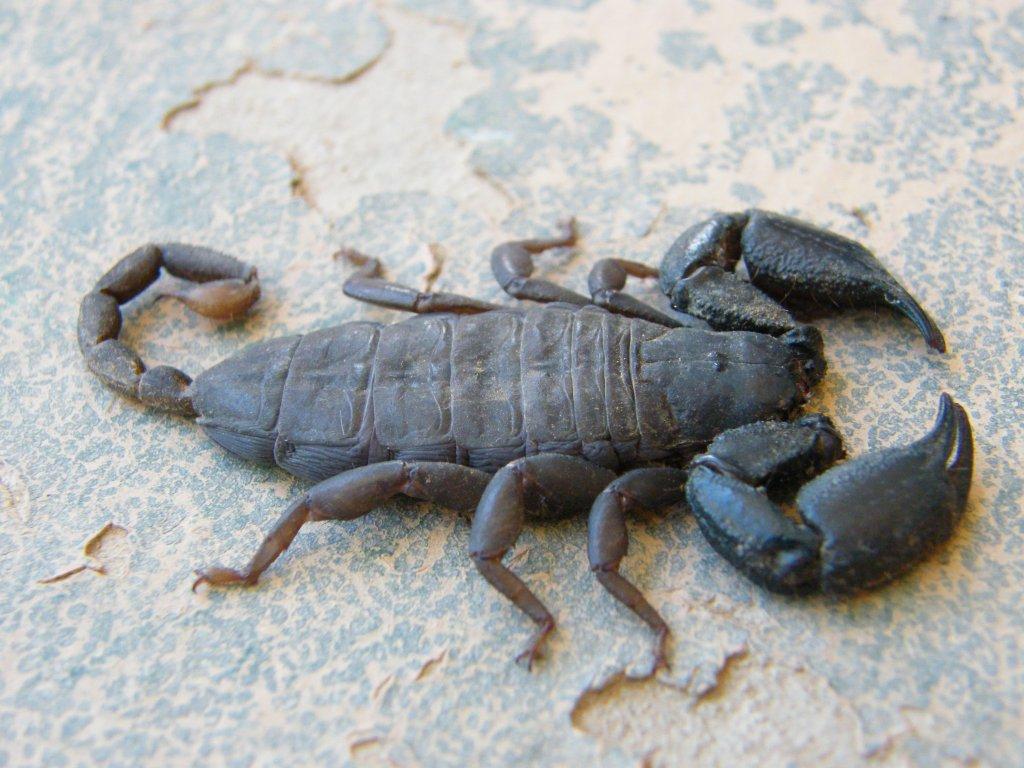 Scorpion Trip DSCF1546_zps065b5ec7