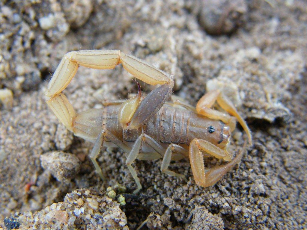 Scorpion Trip DSCF1600_zpsee83022e