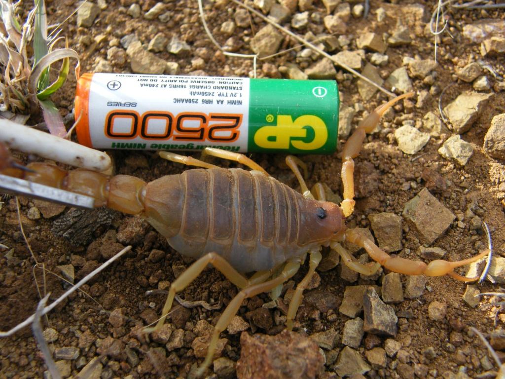 Another (smaller) scorpion trip DSCF2518_zpsc0d64c28