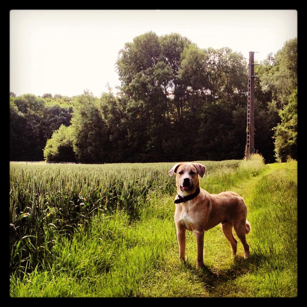 ballade avec chiens en forêt de Fontainebleau - 77 IMG_5002_zps96799f82