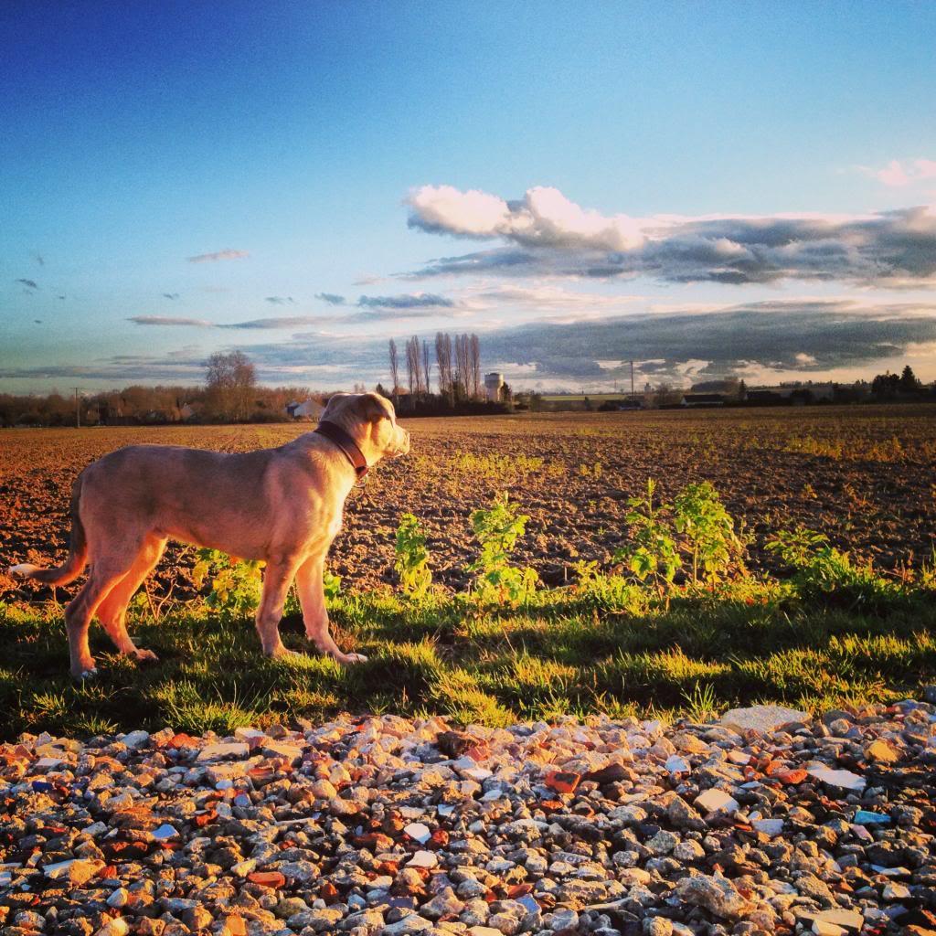 Balade chien en foret de sénart Photo17_zps498489d0