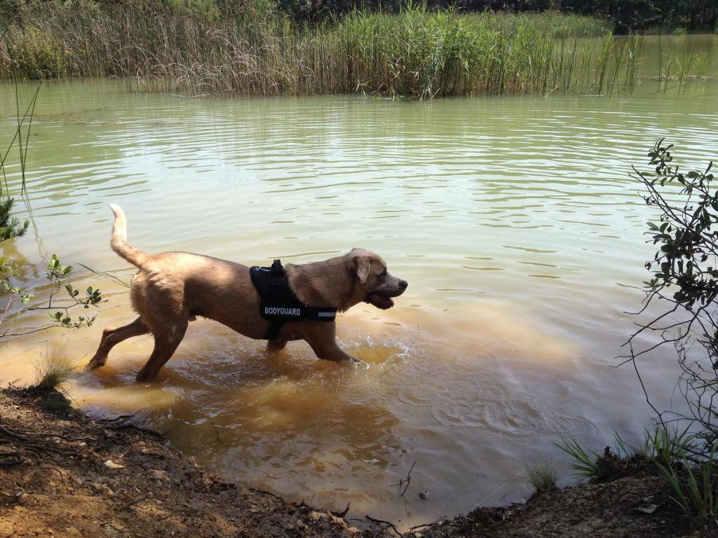 Balade chien en foret de sénart Photo1_zpsb5edb97b