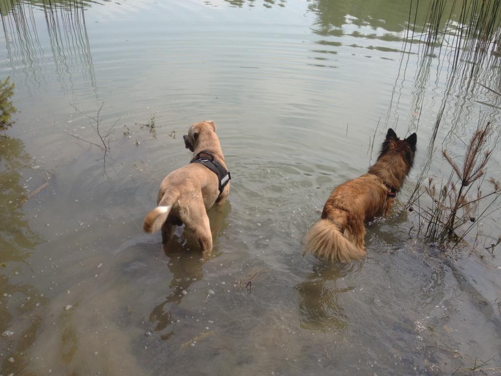 Balade chien en foret de sénart Photo1_zpsf6cccb52