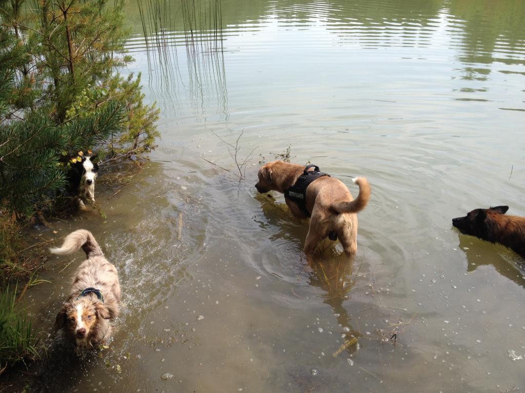 Balade chien en foret de sénart Photo3_zpsae4ebb65