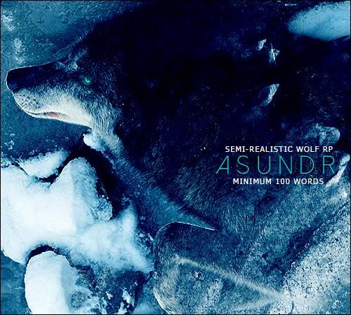 Asundr - Semi-Realistic Wolf RP Asundrad_zpsmokzglto