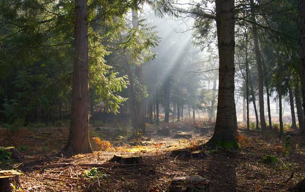 Bosque de Dean Forest_Of_Dean_1_by_angel1592Stock_zps01e30333