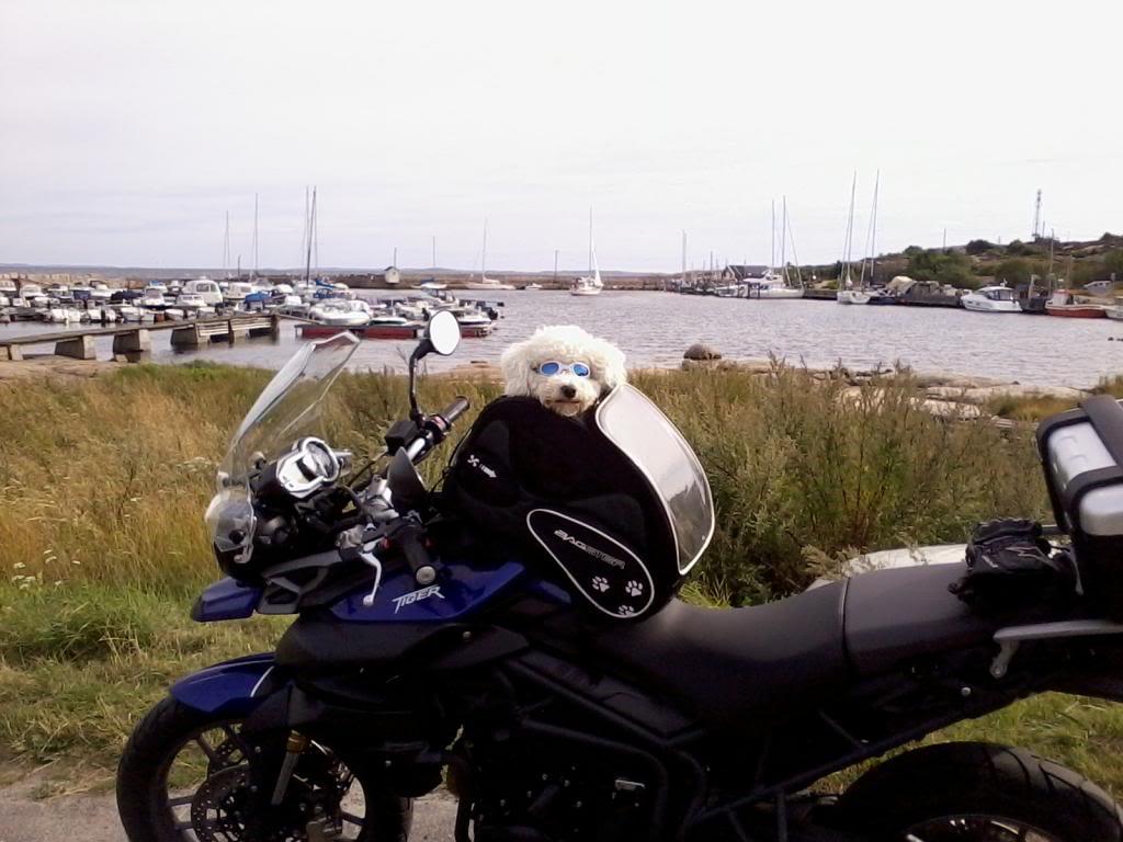Våre motorsykler - Page 10 Foto0202_zps6fbfefc2