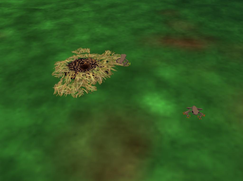 Rana de Arborícola de Linda / Linda´s Tree Frog 1_zps167172b5