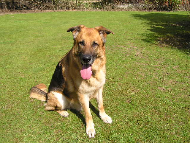 Rocky 6yr old homed P1010001_zps1e325699