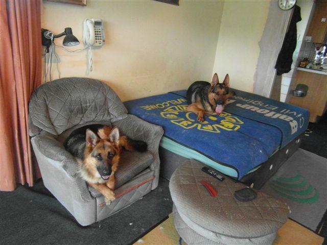 Poppy and Cass SAM_00522_zps9ba244a5